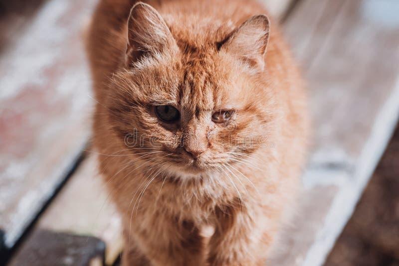 Retrato de um gato da rua Gato s? desabrigado Gato infeliz e triste imagem de stock royalty free