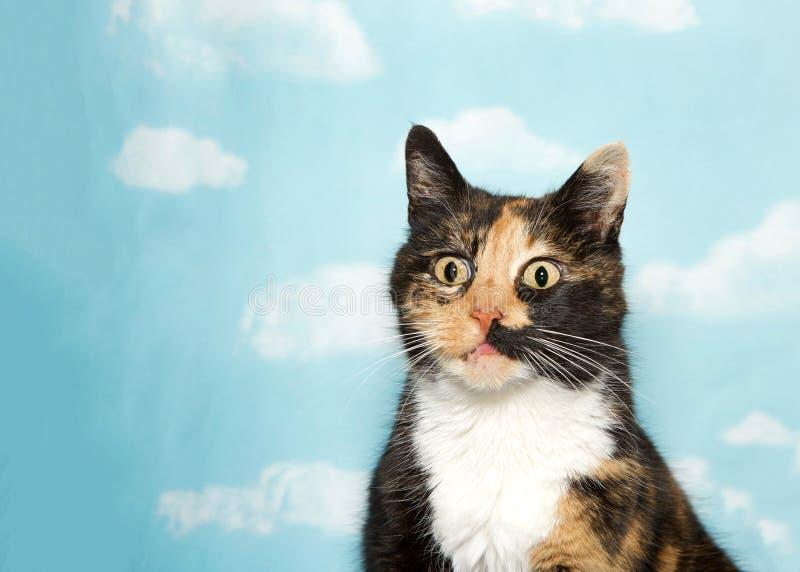 Retrato de um gato de chita surpreendido no fundo do céu imagens de stock royalty free