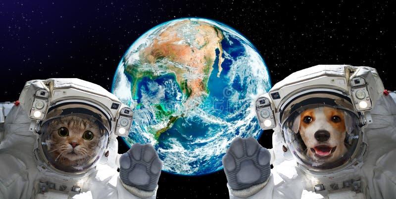 Retrato de um gato e de astronautas do cão no fundo do globo foto de stock royalty free