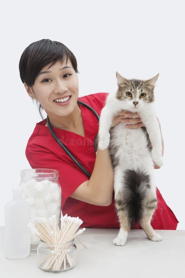 Retrato de um gato guardando veterinário fêmea asiático contra o fundo cinzento imagem de stock royalty free