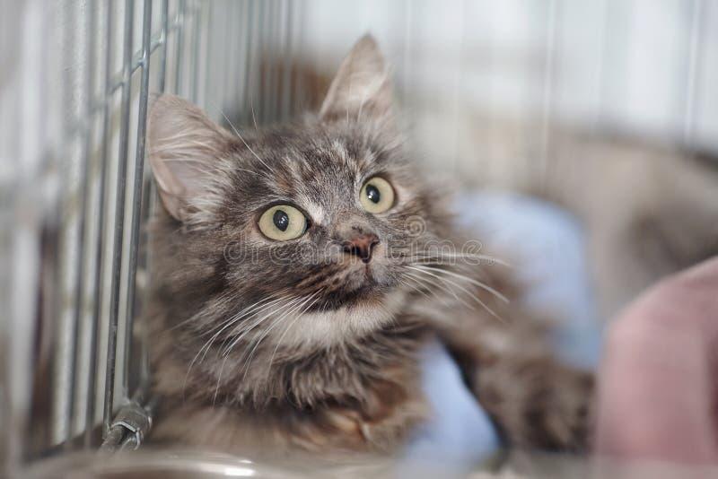 Retrato de um gato macio cinzento em uma gaiola imagem de stock royalty free