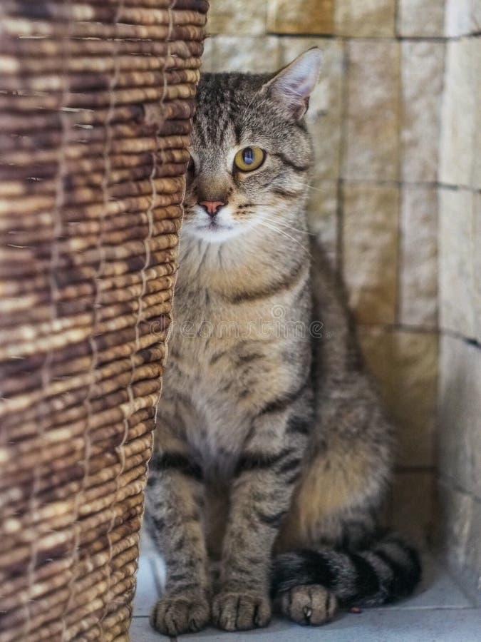 Retrato de um gato que esconde atrás da cesta fotografia de stock royalty free