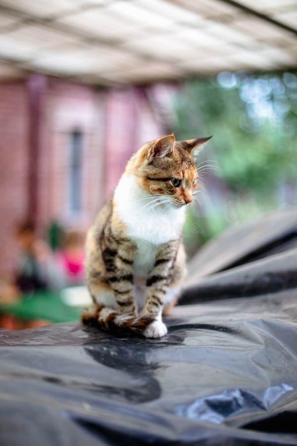 Retrato de um gato ruivo bonito no campo foto de stock