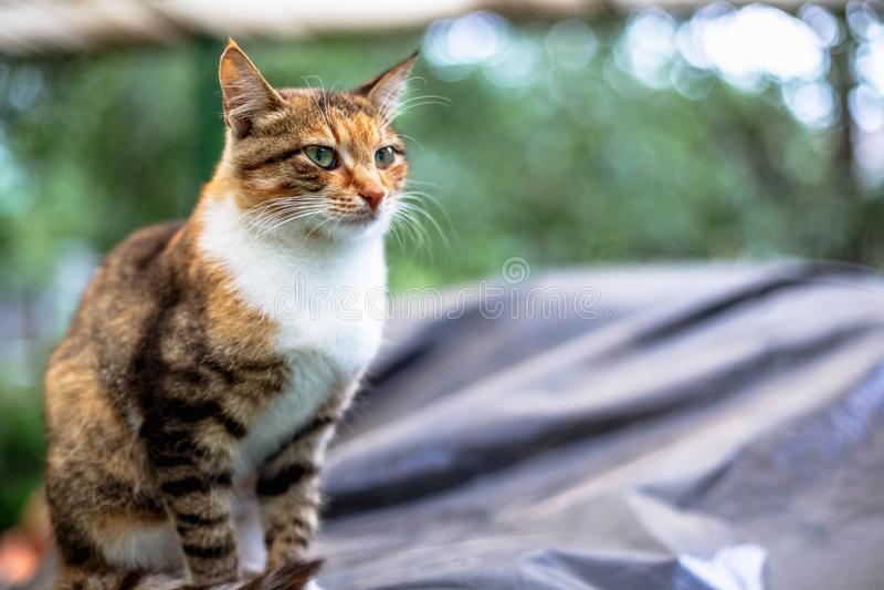 Retrato de um gato ruivo bonito no campo imagem de stock royalty free