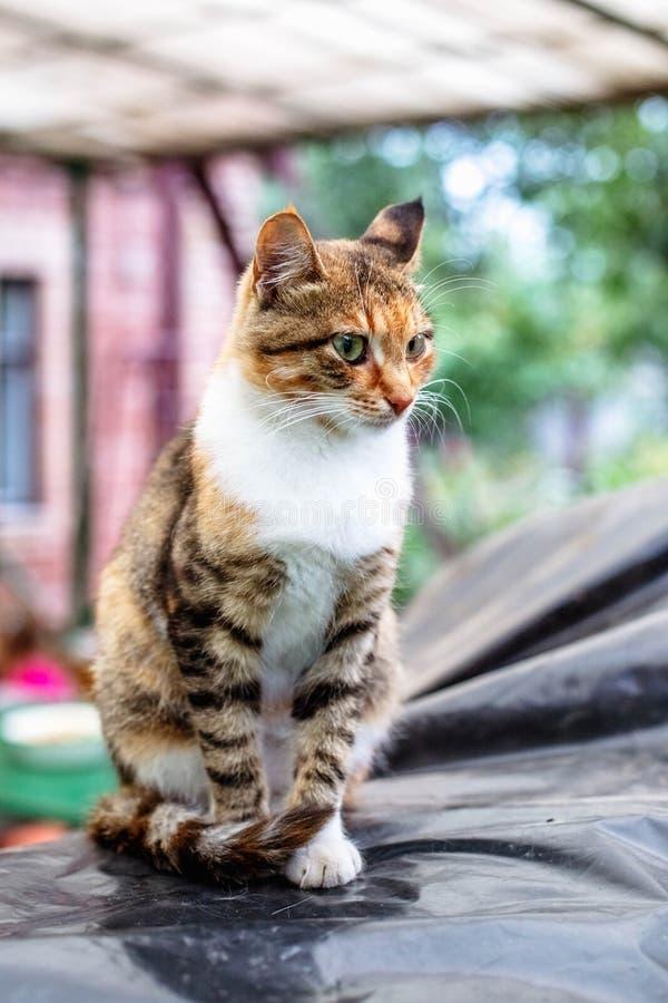 Retrato de um gato ruivo bonito no campo fotografia de stock royalty free