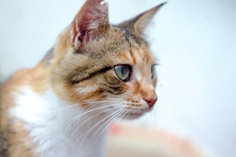 Retrato de um gato ruivo bonito no campo imagens de stock royalty free