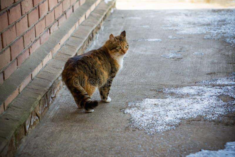 Retrato de um gato vermelho no campo fotos de stock