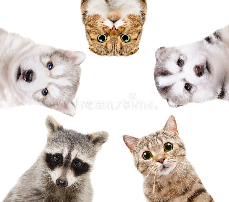 Retrato de um grupo de animais fotografia de stock royalty free