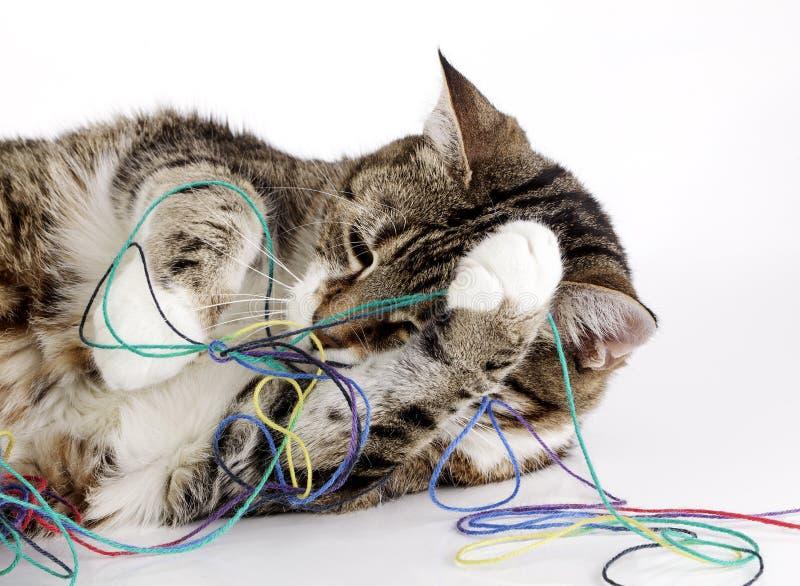 Download Gato brincalhão imagem de stock. Imagem de manchado, animal - 29846705