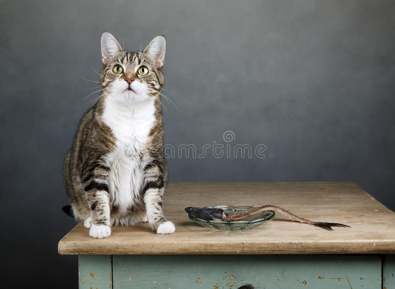 Gato e arenques fotografia de stock royalty free