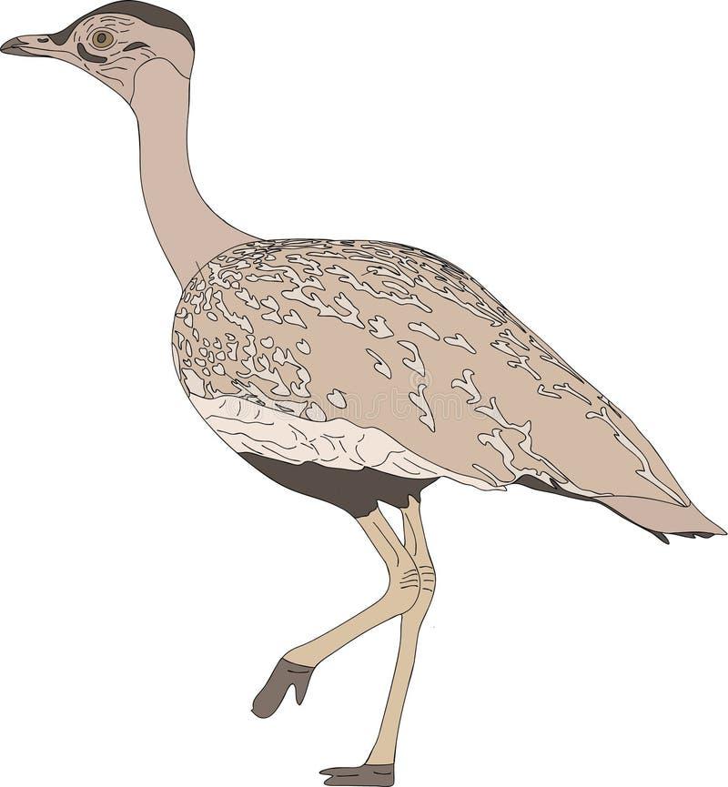 Retrato de um pássaro selvagem do courser ilustração stock