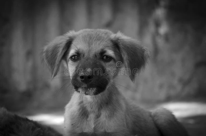 Retrato de um residente desabrigado do abrigo do cão fotos de stock