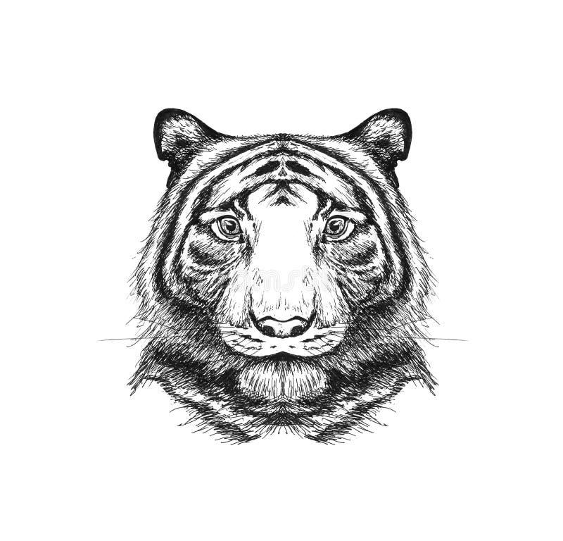 Retrato de um tigre pintado no lápis Desenhado à mão Fim acima Iso ilustração do vetor