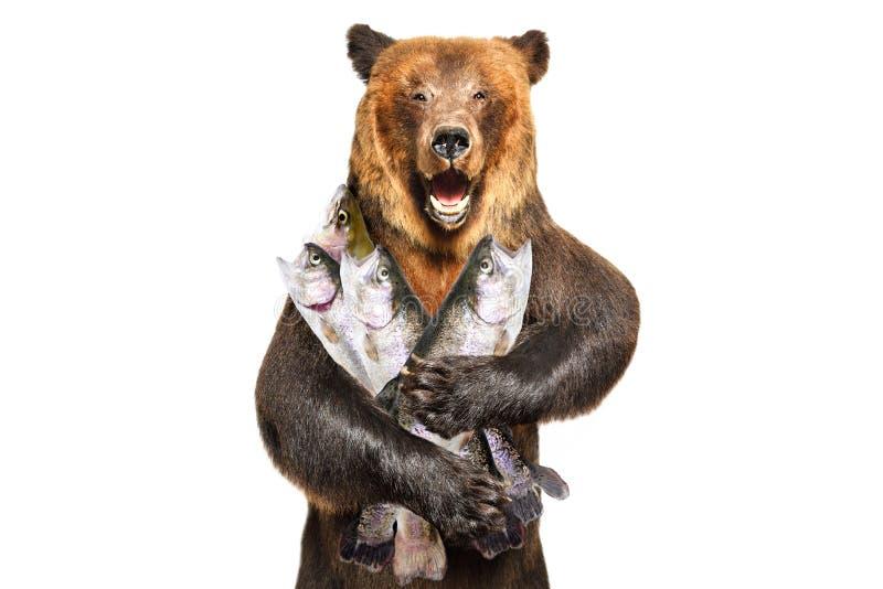 Retrato de um urso marrom que realiza nas patas de uma truta fotografia de stock royalty free