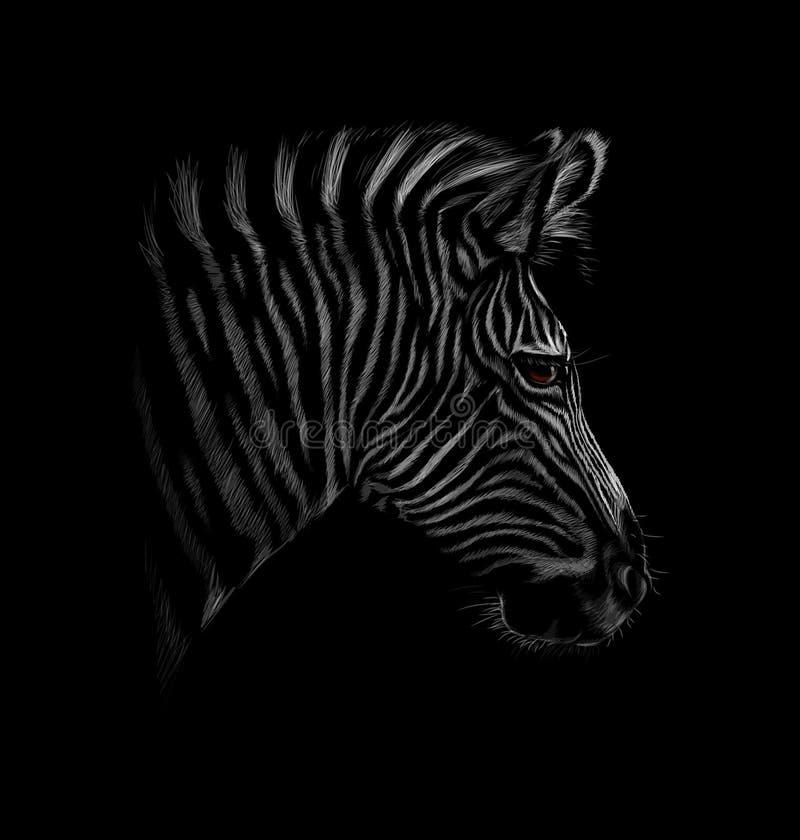 Retrato de uma cabeça da zebra em um fundo preto ilustração royalty free