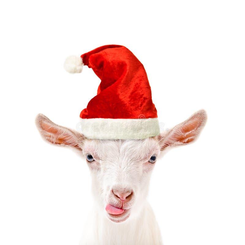 Retrato de uma cabra engraçada em um tampão do ` s do ano novo foto de stock