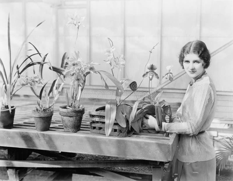Retrato de uma jovem mulher que atende a suas orquídeas (todas as pessoas descritas não são umas vivas mais longo e nenhuma propr fotografia de stock royalty free