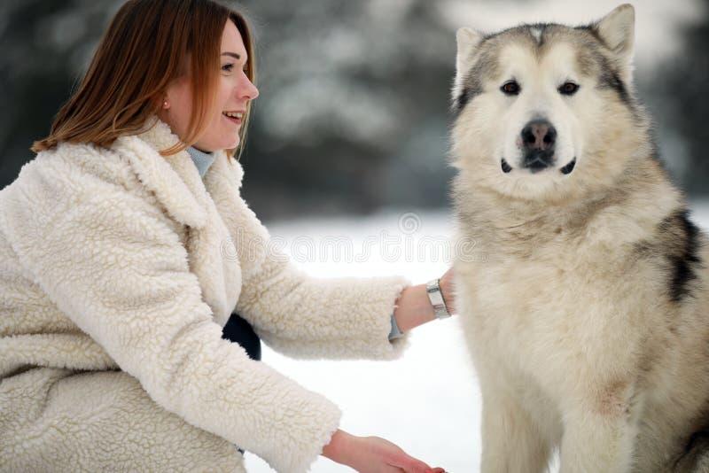 Retrato de uma menina ao lado de um Malamute do Alasca do cão para uma caminhada imagem de stock royalty free
