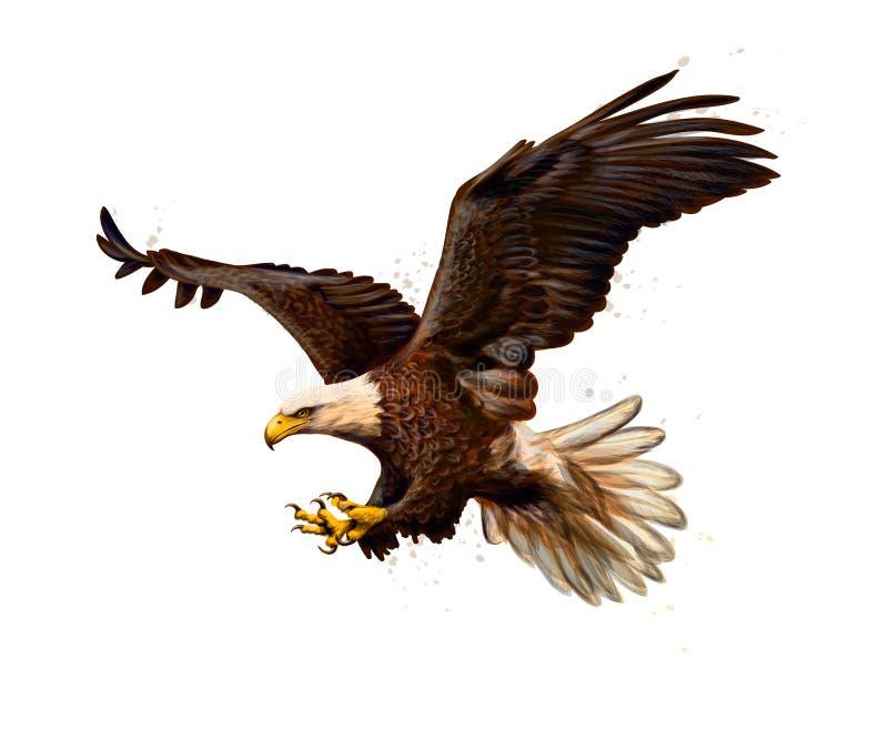 Retrato de un águila calva de un chapoteo de la acuarela, bosquejo exhausto de la mano libre illustration