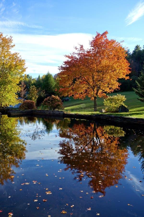 Retrato de un árbol del otoño imagen de archivo