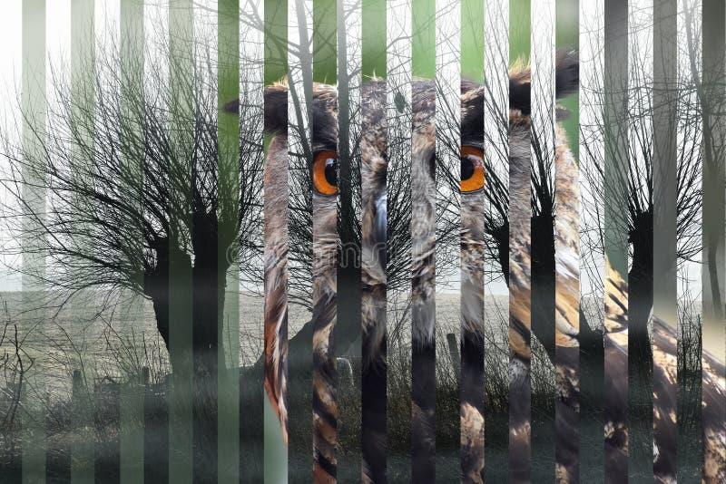 Retrato de un bubón eurasiático del bubón del búho de águila y de su corte del hábitat en tiras, el concepto para la extinción de ilustración del vector