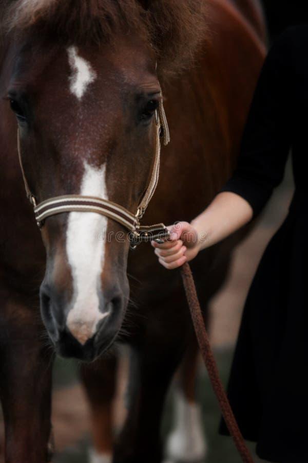 Retrato de un caballo marrón con un freno foto de archivo