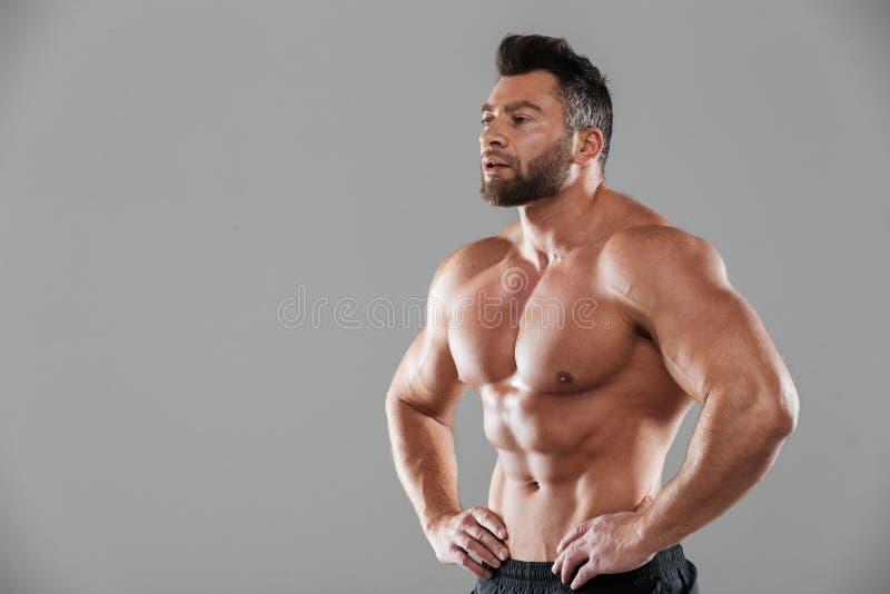 Retrato de un culturista masculino descamisado fuerte sano foto de archivo