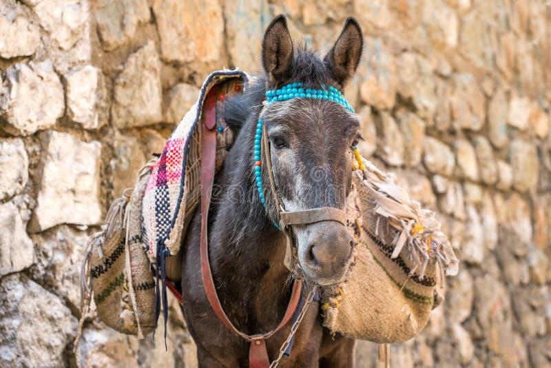 Retrato de un dunkey con los bolsos fotografía de archivo libre de regalías