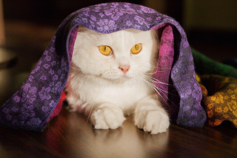 Retrato de un gatito blanco lindo fotos de archivo