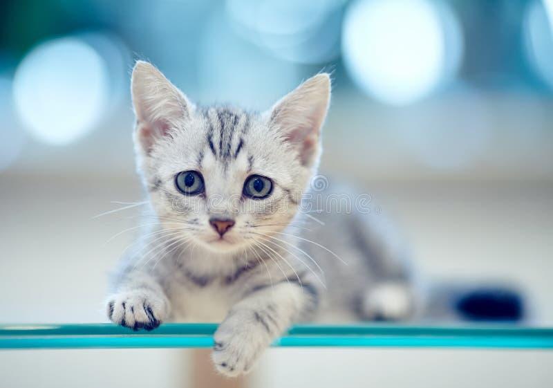Retrato de un gatito rayado gris imagen de archivo libre de regalías