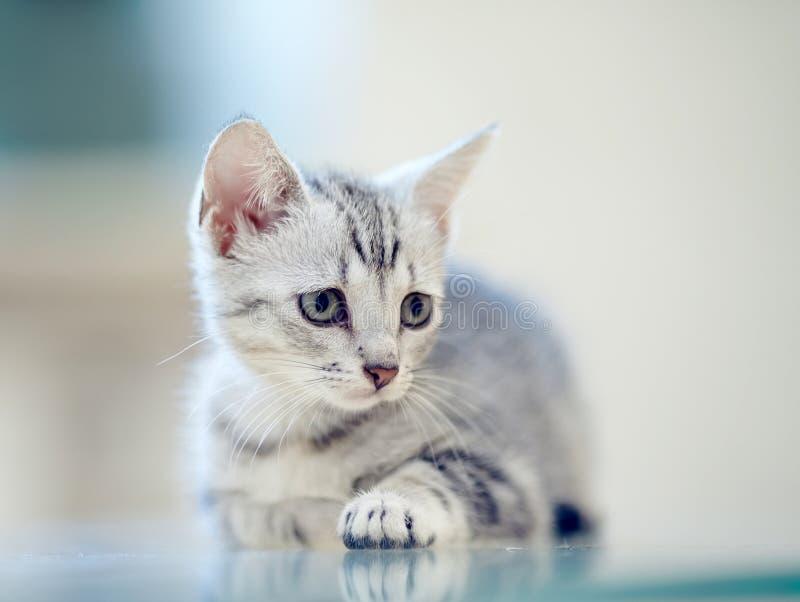 Retrato de un gatito rayado gris foto de archivo