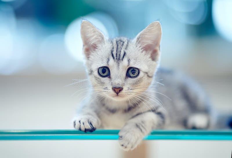 Retrato de un gatito rayado gris foto de archivo libre de regalías