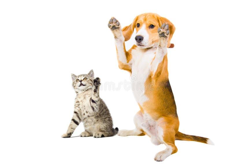Retrato de un gatito y de un perro fotografía de archivo libre de regalías