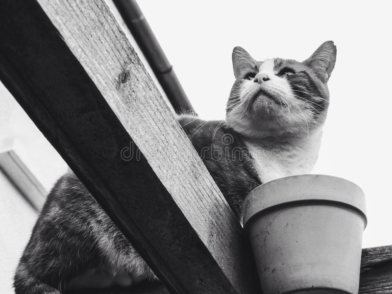 Retrato de un gato fotografía de archivo libre de regalías