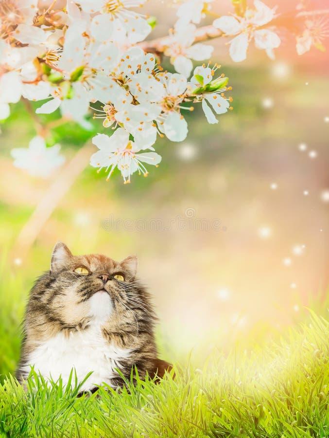 Retrato de un gato en el fondo de la naturaleza del flor de la primavera fotografía de archivo