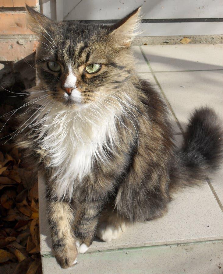 retrato de un gato mullido lindo adorable fotos de archivo