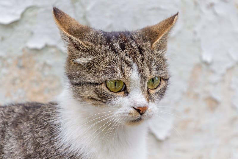 Retrato de un gato rayado con los puntos blancos en un background_ ligero imágenes de archivo libres de regalías