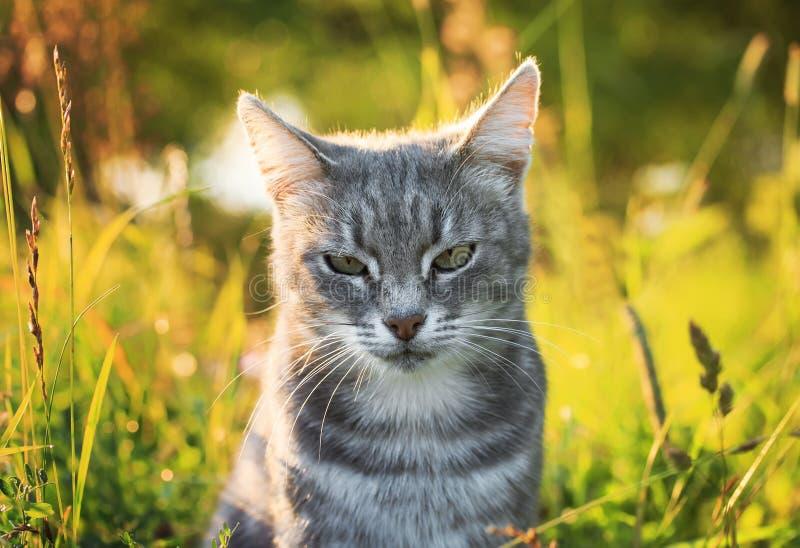 Retrato de un gato rayado lindo en un verano verde claro soleado yo foto de archivo