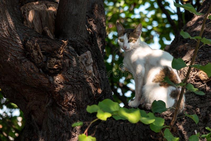 Retrato de un gato sin hogar imagenes de archivo