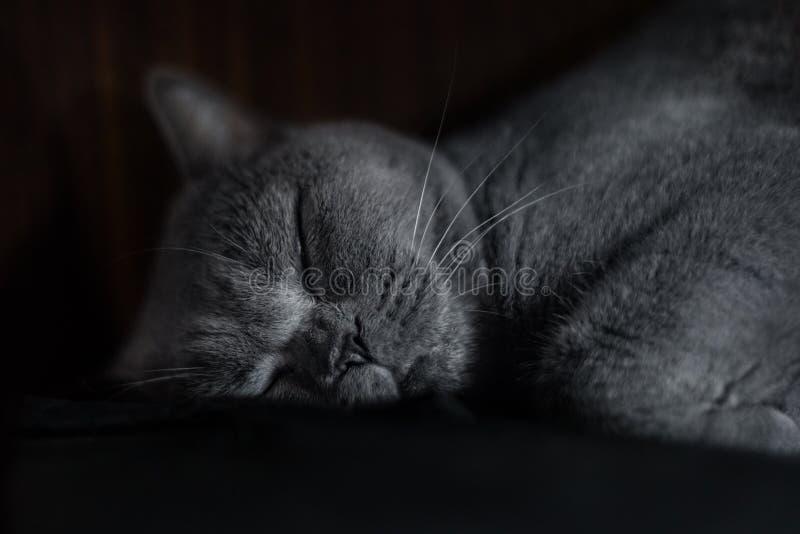 Retrato de un gato soñoliento fotos de archivo