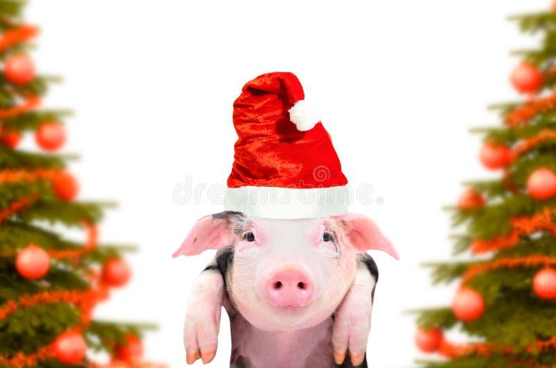 Retrato de un guarro lindo en el fondo de árboles de navidad imagen de archivo