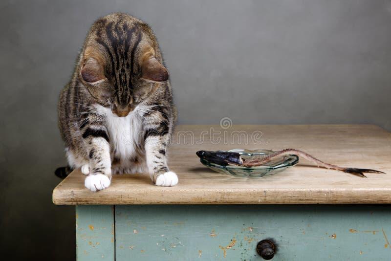 Gato y arenques foto de archivo libre de regalías