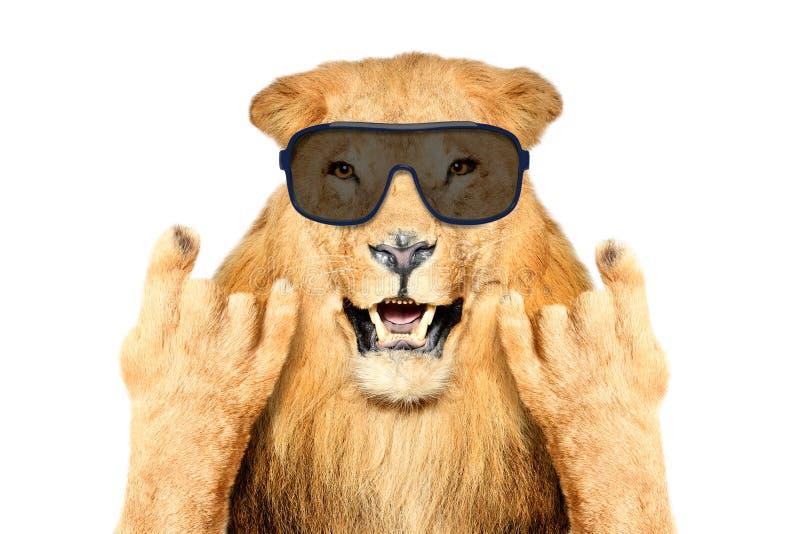 Retrato de un león divertido en gafas de sol, mostrando un gesto de la roca imagen de archivo libre de regalías
