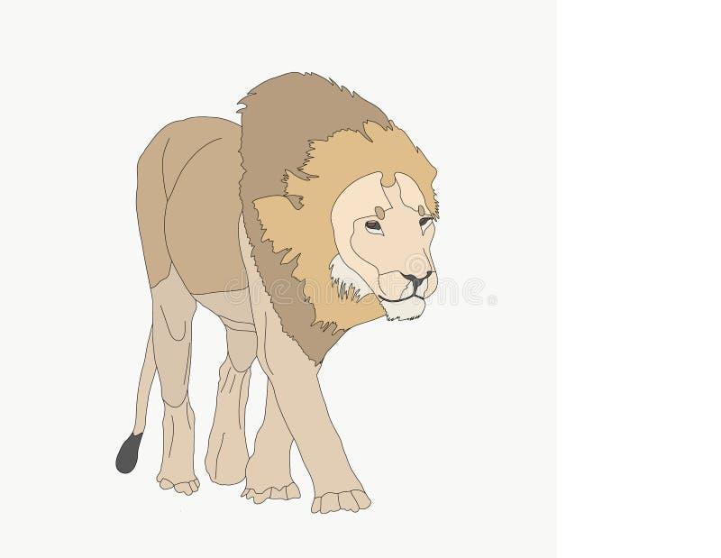 Retrato de un león hambriento que camina stock de ilustración