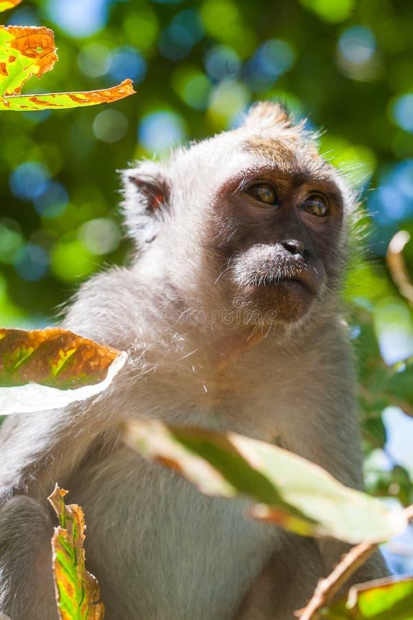 Retrato de un mono imagen de archivo