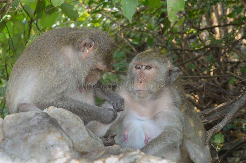 Download Retrato De Un Mono En Fauna Foto de archivo - Imagen de yermo, especie: 64203594