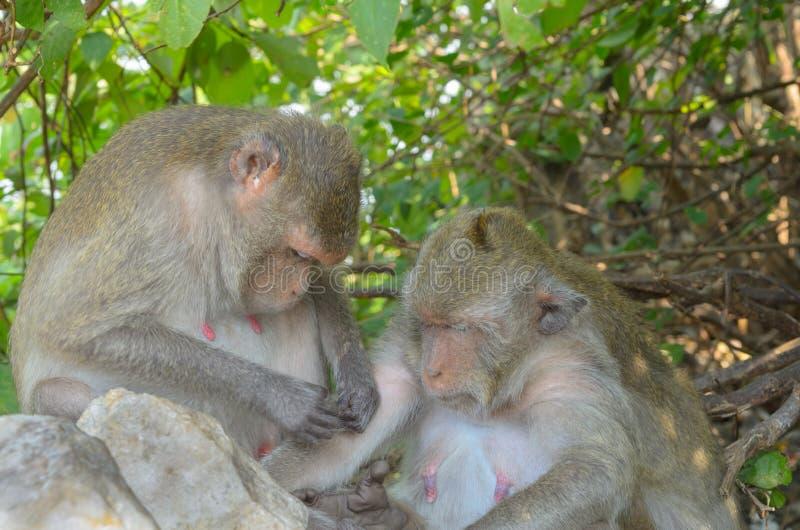 Download Retrato De Un Mono En Fauna Foto de archivo - Imagen de temas, feeding: 64203610