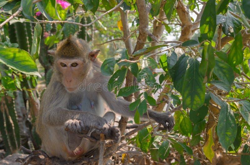 Download Retrato De Un Mono En Fauna Imagen de archivo - Imagen de d0, madre: 64203647