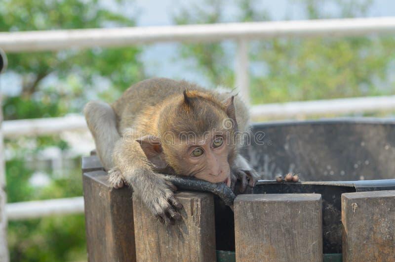 Download Retrato De Un Mono En Fauna Imagen de archivo - Imagen de área, animales: 64203745