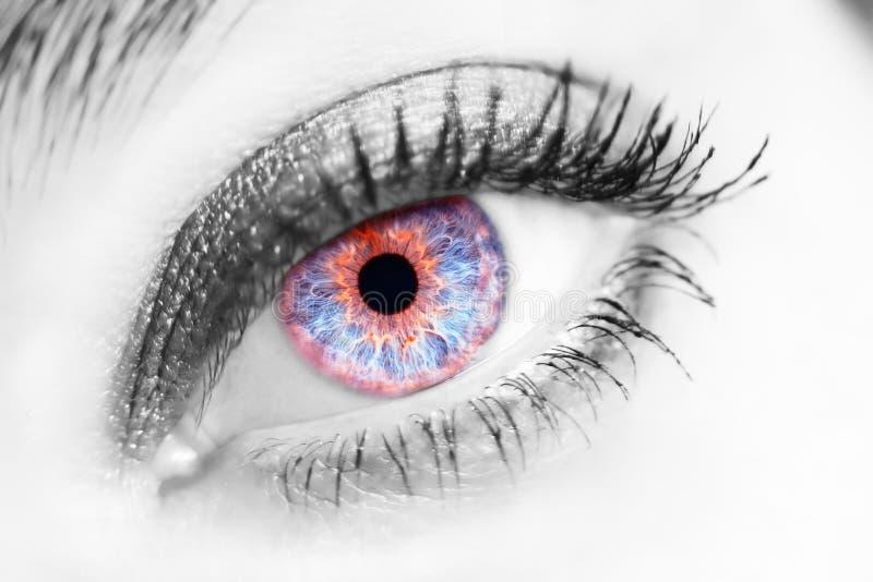 Retrato de un ojo azul femenino hermoso foto de archivo